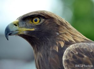 Canadian Raptor Conservancy – Birds of Prey :
